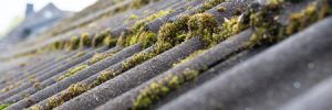 Roof With Moss On It